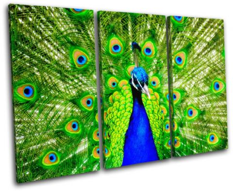 Peacock Feathers Animals - 13-0902(00B)-TR32-LO